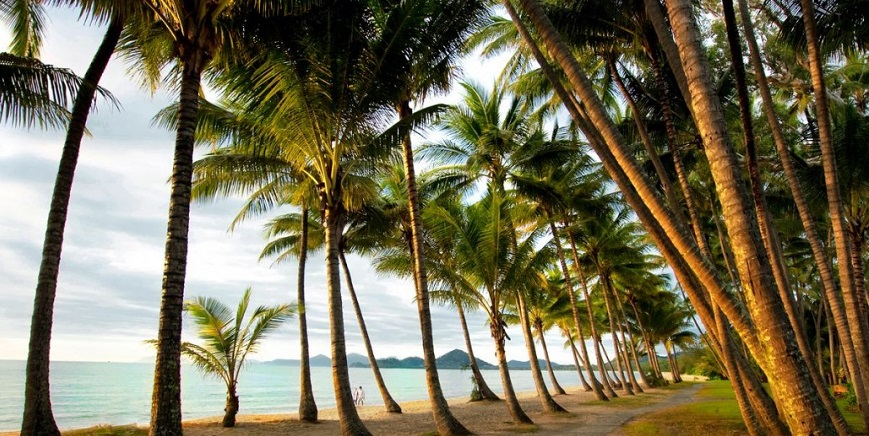 Palm-Cove-Palm-Trees1-1030x687